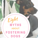 truth about fostering dogs