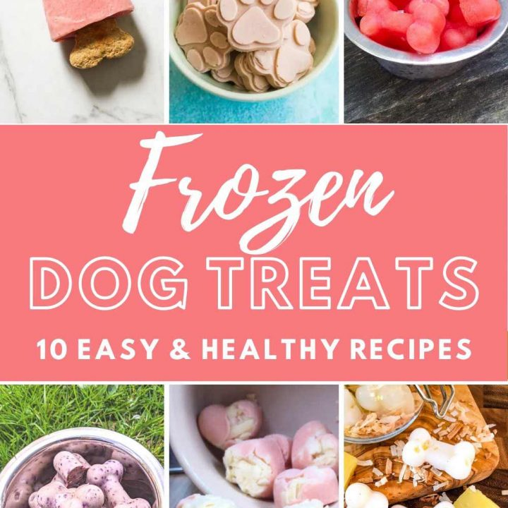 frozen dog treat collage